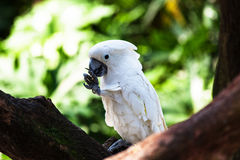 White of beautiful parrot Stock Photography