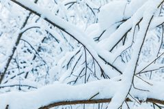 The white beautiful winter background of the branches of the trees in the forest or in the park under the snow royalty free stock photos