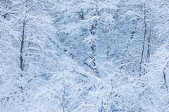 The white beautiful winter background of the branches of the trees in the forest or in the park under the snow stock image