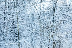 The white beautiful winter background of the branches of the trees in the forest or in the park under the snow stock photos
