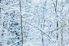 The white beautiful winter background of the branches of the trees in the forest or in the park under the snow stock photography