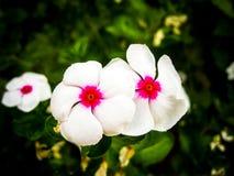 The white beauty Stock Photo