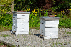 White bee boxes Stock Images