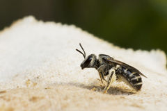 White bee is stand on white fabric Stock Images