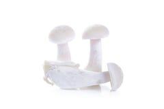 White beech mushroom isolated on white Royalty Free Stock Image