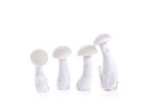 White beech mushroom isolated on white Stock Photos