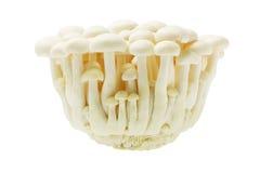 White Beech Mushroom Stock Images
