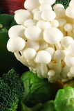 White beech mushrooms. Fresh organic gourmet mushrooms,flavorful cooking ingredient Royalty Free Stock Photo