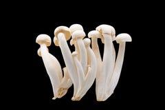 White Beech Mushrooms on Black Background Royalty Free Stock Photos