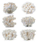 White beech mushrooms, Shimeji mushroom, Edible mushroom isolate Royalty Free Stock Images