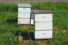 White beehives on grass at the farm for pollination or honey production Royalty Free Stock Image