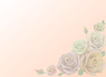 White beige pink roses. Light corner background. Royalty Free Stock Images