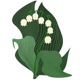 White bell flower with leaves. Stylized lily of the valley illustration. White and light beige colored bell flowers with covering green leaves isolated on white Royalty Free Stock Images
