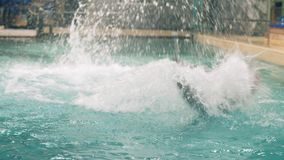 White beluga whale swimming in water during show in dolphinarium pool. Beluga training in floating pool in dolphinarium stock footage