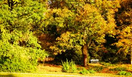 White bench and autumn leaves in a park royalty free stock photography
