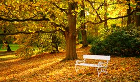 White bench and autumn leaves in a park royalty free stock photo