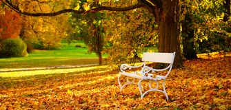White bench and autumn leaves in a park royalty free stock image