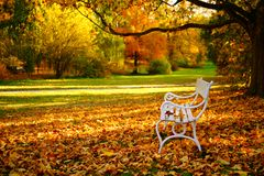 White bench and autumn leaves in a park royalty free stock photos