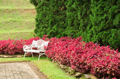 White bench in garden Stock Photography