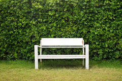 White bench in a green garden. Old white bench in a green garden with green hedge background royalty free stock photography