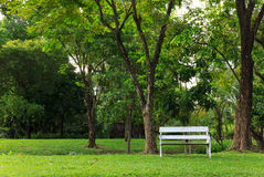 White bench in green park in the summer Royalty Free Stock Photo