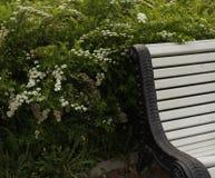 White bench park green plants outdoor garden. White bench green plants park nature summer blossom botanical stock photo