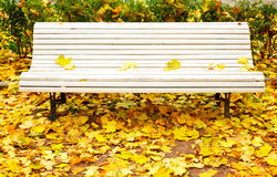 White bench in park Royalty Free Stock Images