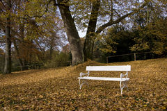 White bench under autumn tree Stock Photo