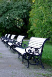 White benches. In a line in park Stock Image
