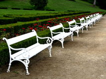 White Benches in Chateau Hluboká Park. The line of white benches in the park of chateau Hluboká with red roses Royalty Free Stock Photo