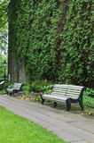 White benches in park near wall covered by climbing plants. White benches in park near stone wall covered by climbing plants Royalty Free Stock Image