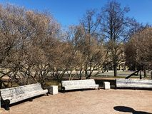 White benches and trees in the Park. View royalty free stock photo