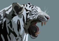 White Bengal tiger. The vector illustration of white Bengal tiger Stock Photography