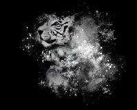 White Bengal Tiger with Art Paint on Black Stock Photography