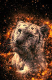 White Bengal tiger. Fire illustration Stock Photography