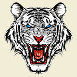 White bengal tiger head Stock Photo