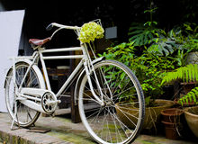 White bicycle before a coffee shop. A delicate coffee shop in the city,with a bicycle Royalty Free Stock Image