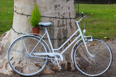 White Bicycle Leaned On A Tree. With A Green Pot Plant On The Back Stock Photos