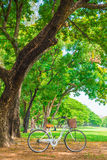 White bicycle in the park Stock Image