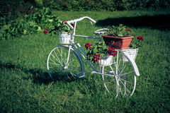 White bicycle support with blooming flowers  Royalty Free Stock Photo