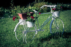 White bicycle support with blooming flowers Royalty Free Stock Photography