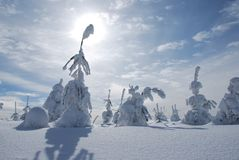 White big foot man snowy tree Royalty Free Stock Image