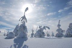 White big foot man snowy tree. White romantic winter mountains snowy trees Royalty Free Stock Image