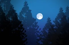 White big full moon over pine forest at night Royalty Free Stock Photos
