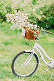 White bike with floral wedding decoration in basket Royalty Free Stock Image