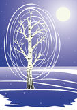White birch. Winter night landscape with snow-covered birch Stock Photos
