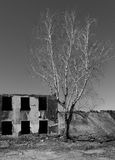 White Birch Abandoned Dilapidated Building Royalty Free Stock Image