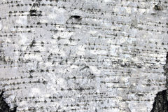 White birch bark, closeup natural texture background Stock Photography