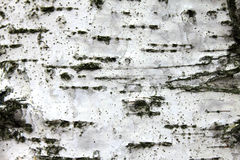 White birch bark, closeup natural texture background Stock Photos