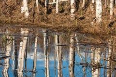 White birch bark. In sprigtime Stock Photo